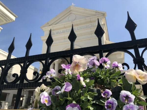 新潟市結婚式場 ブレストン お花 パンジー ビオラ 広場 春