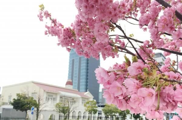 新潟市結婚式場 ブレストン 桜 万代テラス 桜ウェディング
